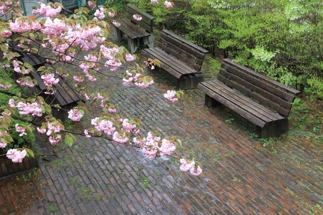 大学のベンチ
